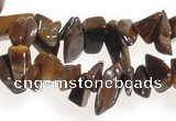 CCH30 34 inches tigers Eye chips gemstone beads wholesale