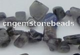 CCH627 15.5 inches 6*8mm - 10*14mm iolite gemstone chips beads