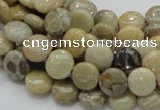 CFA06 15.5 inches 10mm flat round chrysanthemum agate gemstone beads