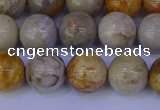 CFC203 15.5 inches 10mm round fossil coral beads wholesale