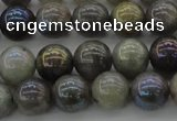 CLB603 15.5 inches 10mm round AB-color labradorite beads
