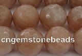 CMS945 15.5 inches 14mm faceted round A grade moonstone gemstone beads